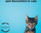 Cystitis causes pain and discomfort in cats