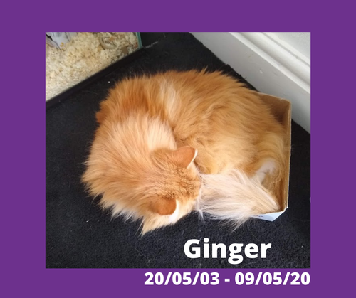 GInger - Not just a pet