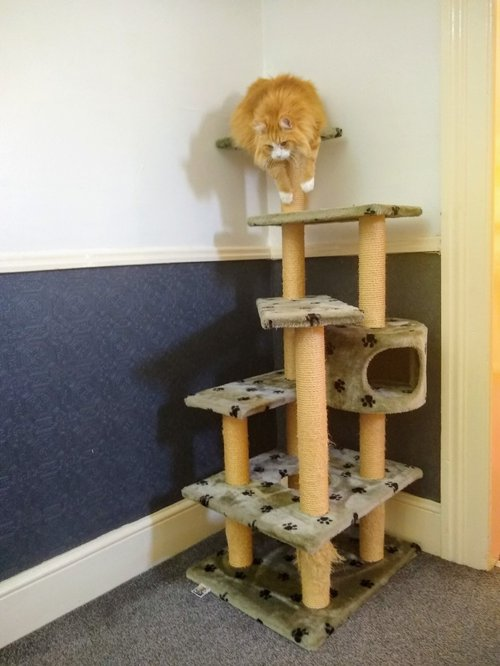 One of Ginger's Scratching Posts / Cat Trees