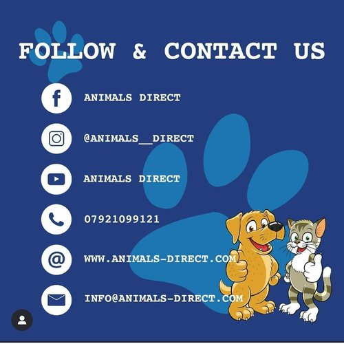 Animals Direct Contact Details