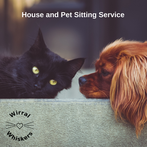 House Sitting Service