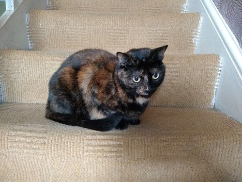 Bindi - Cat sat on stairs